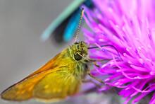 Beautiful Butterfly Drinking N...