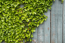 Rough Wooden Fence With Half S...