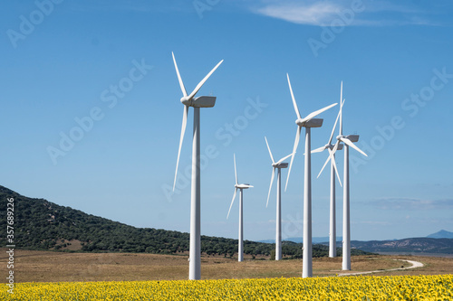Molinos de viento sobre campo de girasoles Canvas Print