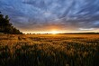 canvas print picture - fields of gold  wheat field in the summer sunset with a cloudy sky