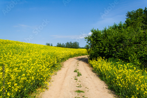 Beautiful image of a centered country road with trees around the perimeter. Fields of blooming yellow rapeseed against blue sky with clouds. Growing crops. Spring sunny landscape. Nature wallpaper #357694872