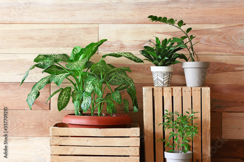 Fotografiet Green houseplants with boxes near wooden wall