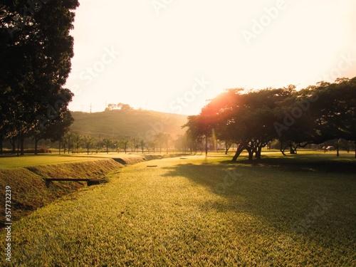 Photo Gramado verde com árvores cobertas gotículas de orvalho de um amanhecer ensolarado e frio