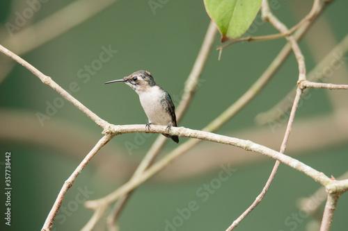 Photo Bee Hummingbird