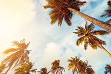 Copy Space Of Tropical Palm Tree With Sun Light On Sky Background.