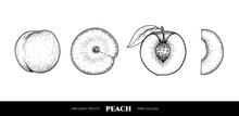 Vector Peaches Hand Drawn Sket...