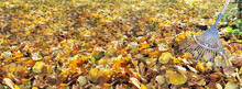 Panoramic View On Golden Leaf ...