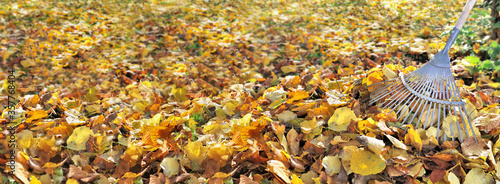 Fotomural panoramic view on golden leaf on the ground in a garden and rake on the right