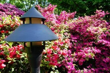 Lamp Surrounded By Pink And Pu...