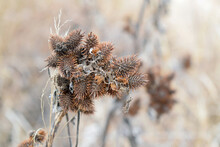Dry Seed Heads In The Cold