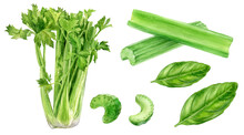 Set Of Frech Celery With Basil...