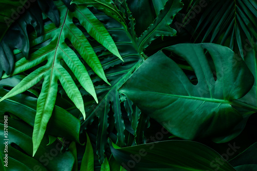 Fototapety, obrazy: closeup nature view of tropical green monstera leaf and palms background. Flat lay, fresh wallpaper banner concept
