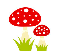 Two Red Toadstool Mushrooms Ca...