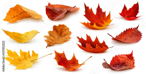 Foto Isolated leaves