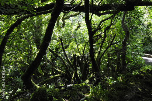 Bois recouvert de mousse et de végétation luxuriante dans la forêt humide du parc national de Killarney dans le comté de Kerry en Irlande Billede på lærred
