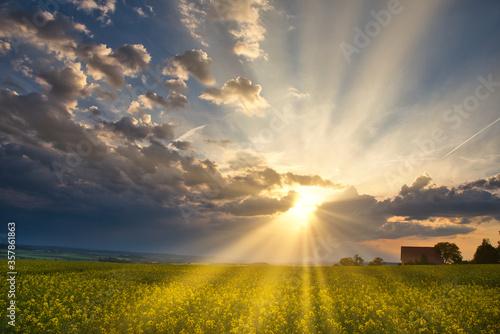 Sonnenuntergang über einem Rapsfeld im Frühling Fotobehang