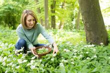 Woman Picking Wild Garlic In W...