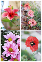 Collage Of Natural Flowers Pop...