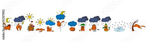 Fotografia, Obraz Cat and the weather color