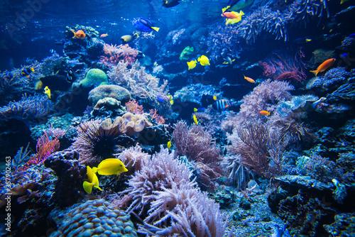 Coral reef and fish underwater photo. Underwater world scene. Fotobehang