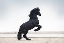 Black Horse Running