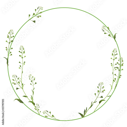 Round floral frame with branches of Shepherd's purse flowers Canvas Print
