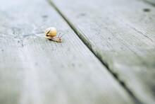 Schnecke Kriecht Auf Holzboden