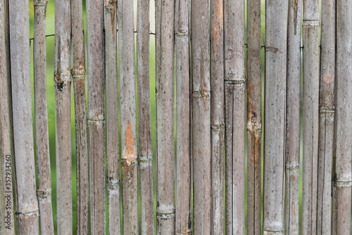 Photo canne bambu texture canniccio