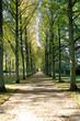 canvas print picture - Park, Avenue, Franzoesischer Garten, Celle, Lower Saxony, Germany, Europe