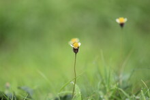 Yellow, Green Background, Yellow Flower Flower, Nature, Green, Grass, Yellow, Spring, Summer, Plant, Daisy, Flowers, Field, Garden, Dandelion, Meadow, Blossom, Beauty, White, Bloom, Flora, Beautiful,