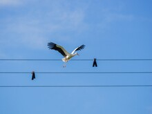 Shot Of A Stork Flying To The ...