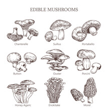 Edible Mushroom Hand Drawn Vec...