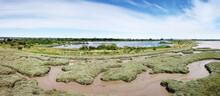 Mud Along The River Bank