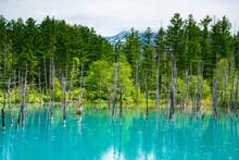 6月の青の池のリフレ