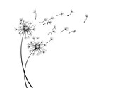 Fototapeta Dmuchawce - The Field dandelion flower sketch with flying seeds.