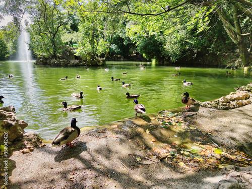 Photo Estanque de los patos en el Campo Grande de Valladolid