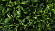 Green Leaves Background. Carpe...