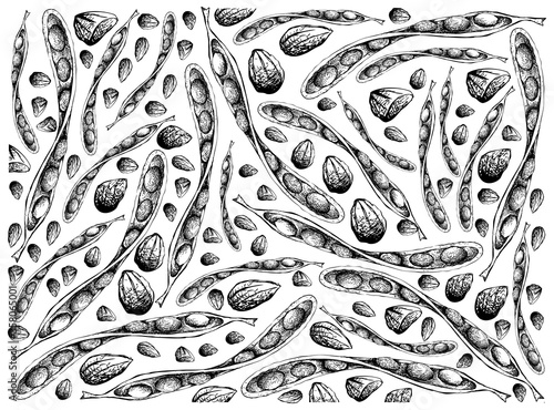 Cuadros en Lienzo Illustration Wallpaper Background of Hand Drawn Sketch of Sato, Parkia Speciosa, Bitter Beans or Twisted Cluster Beans with Carbohydrates, Protein, Folate B9, Pyridoxine B6 and Pantothenic Acid B5