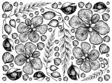 Illustration Wallpaper Backgro...