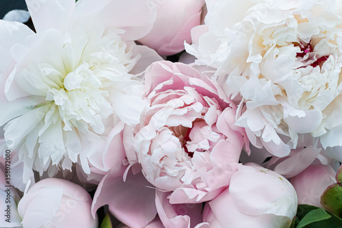 Blooming peony flowers as floral art background, botanical flatlay and luxury br Fototapet