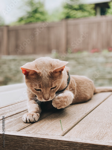 Cat playing with grass on the table