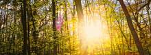 Spring Forest Landscape At Sun...