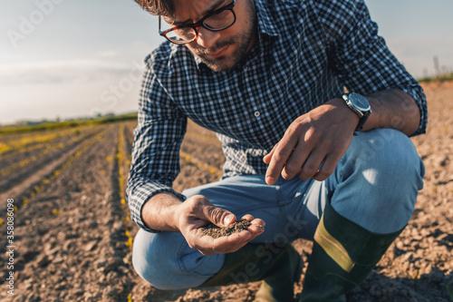 Fototapeta Young farmer in corn field examining soil quality. obraz