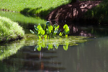 Trees Reflected In Quiet Water