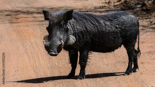 Fotomural Animals in Senegal
