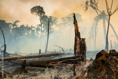Trees on fire with smoke in illegal deforestation in the Amazon Rainforest to open area for agriculture Wallpaper Mural