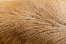 Dog Fur Texture Background Yel...