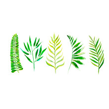 Collection Of Green Plants, Tw...