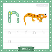 Letter N Lowercase Tracing Practice Worksheet Of Eastern Red-spotted Newt