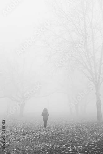 Photo Tree in the foggy winter day